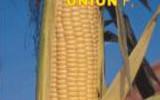 Union_4eaa8ef7afdd6.jpg