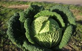 resolution-cabbage.jpg